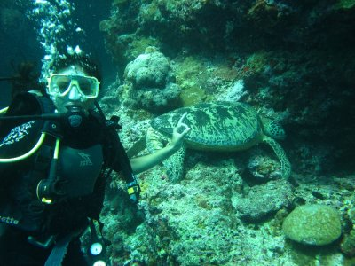 Me and the turtle, Sipadan