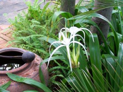 2009-10-15..closeup.jpg