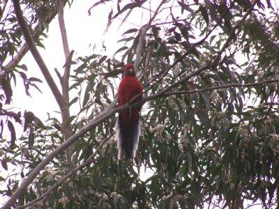 2009-10-23_Parrot.jpg