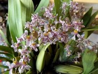 4-tiny-purple-orchids.jpg