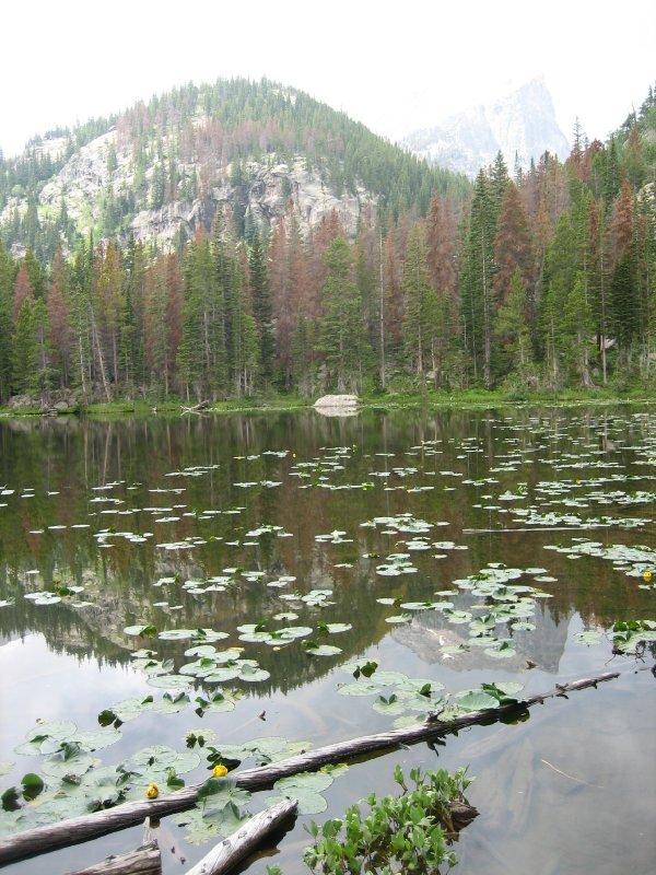 Bear Lake Lily Pads