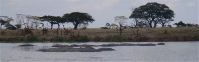 Hippos and trees