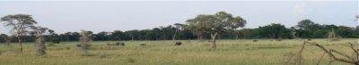 Distant elephant