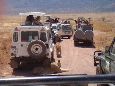 Safari traffic jam