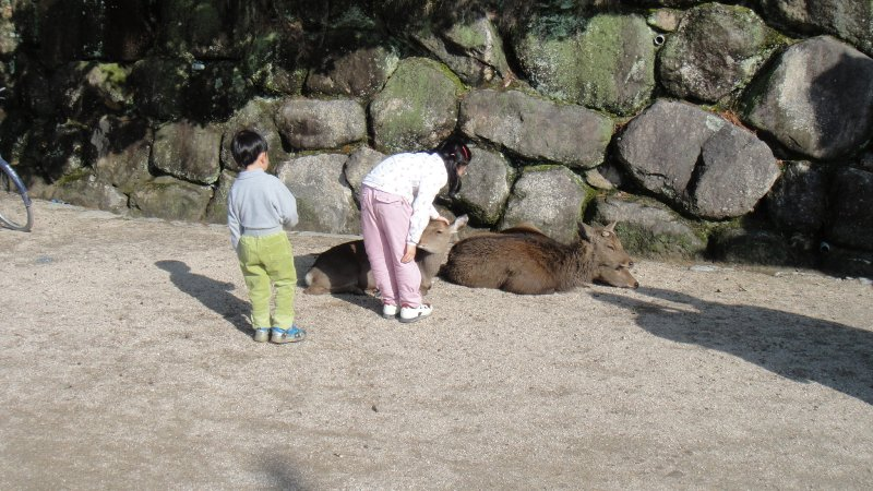 large_A_little_g..iyajima.jpg