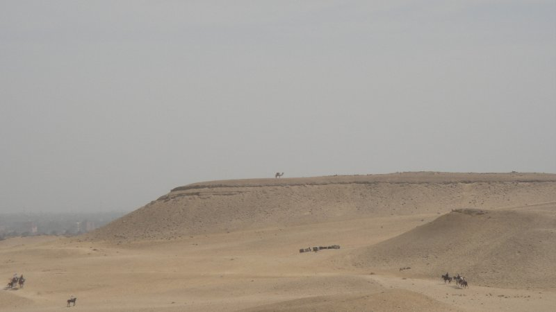 large_Camel_in_d..__Egypt.jpg