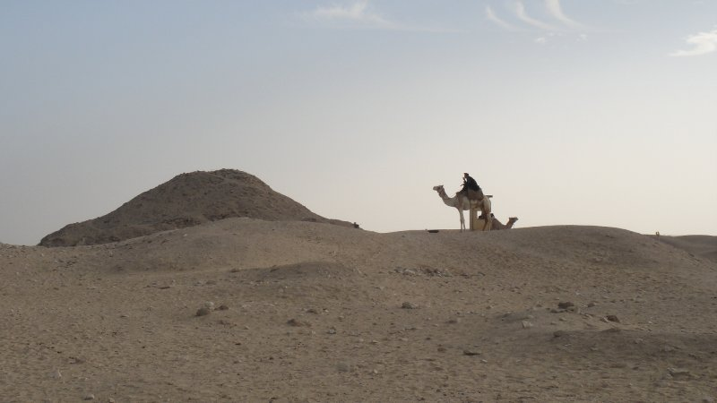 large_Camels_in_..__Egypt.jpg