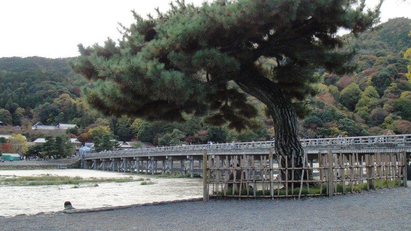 large_Iwatayama_..__Kyoto.jpg