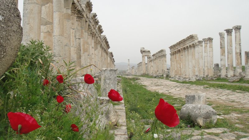 large_Red_Poppie..__Syria.jpg