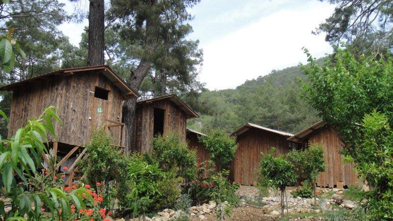 large_Tree_house.._Turkey.jpg