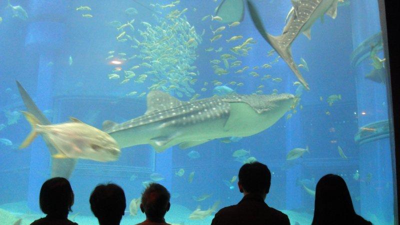 large_Whale_Shar..__Japan.jpg