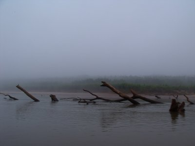 Crusing through the fog. Manu National Park, The Amazon Rainforest.