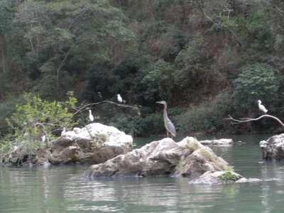 Birds in the canyon