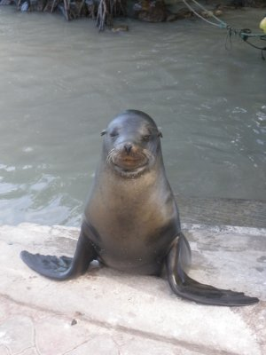 Greetings from the Galapagos Islands...