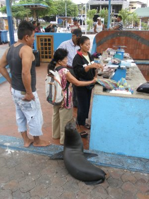 Queuing for fish at the market. In the Galapagos Islands