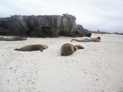 Sealions? In the Galapagos Islands
