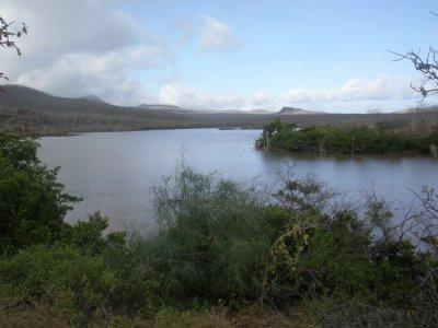 Isabella island. Galapagos