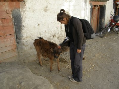 Marsha and cow