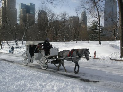 Horse and cart, Central Park
