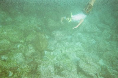 Patrick and a turtle. Snorkelling in the Galapagos Islands