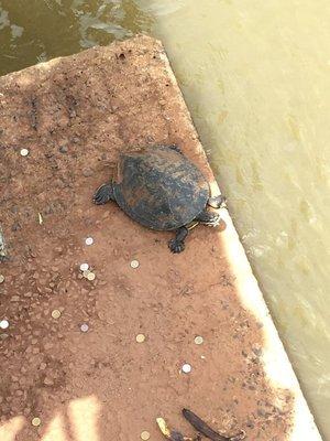 IMG_7695 turtle