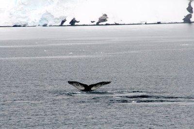 IMG_7197_whale_tale_2.jpg
