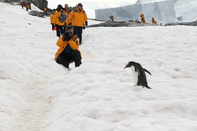 IMG_7498_g..and_penguin.jpg