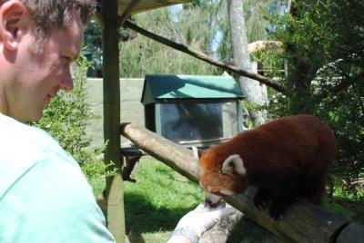 Red_Panda_..012_008.jpg