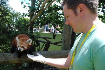 Red_Panda_..012_012.jpg