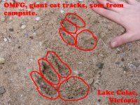 large_DSC08340_-_Cat_Tracks.jpg