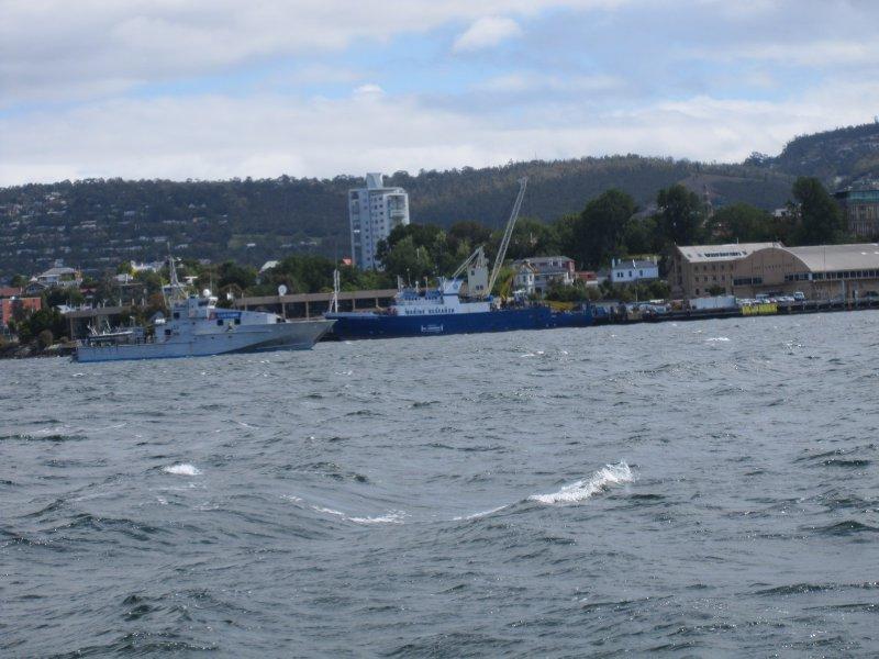 Hobart Jan 2011 035