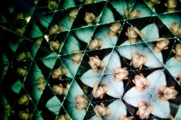 human kaleidoscope
