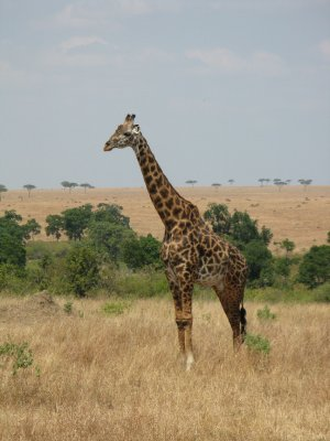 IMG_9557_G..__Kenya.jpg