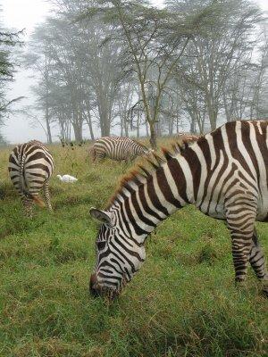 IMG_9804_Z..__Kenya.jpg