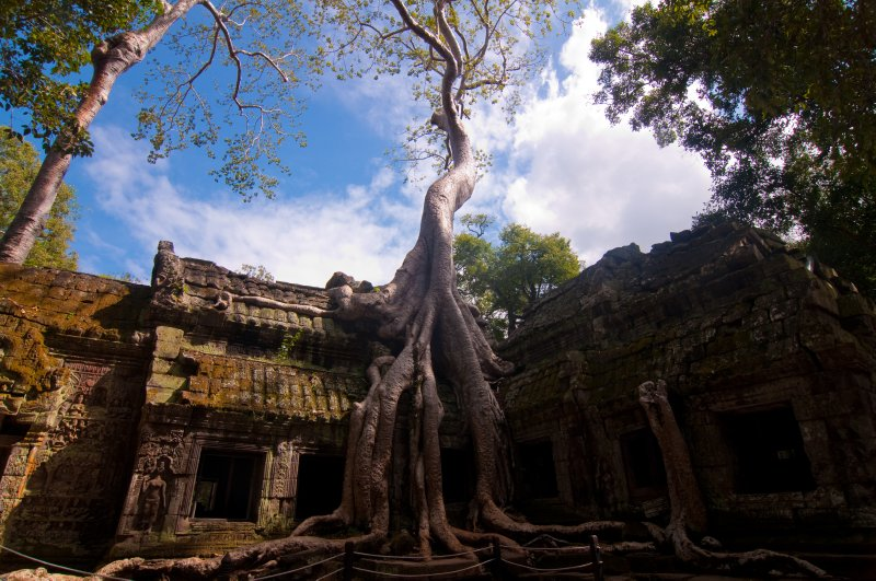 Tree reclaiming a Temple
