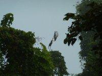 Rhinosceros_Hornbill.jpg