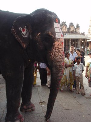 Temple elephant at Virupaksha Temple - which blesses people for money