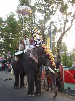 Elephant waiting for the procession to start