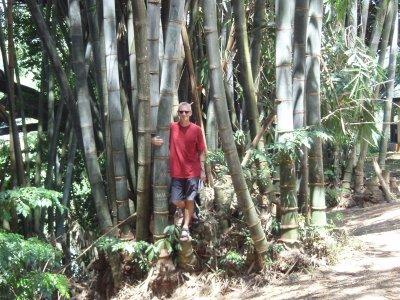 Colin amid the bamboo