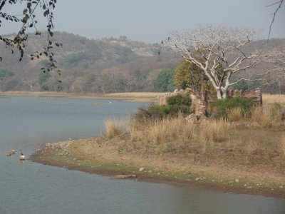 Crocodile lake
