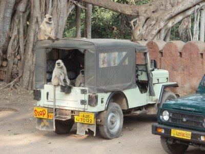 Jeep Langurs