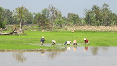 Arrozales en Vientiane, Laos