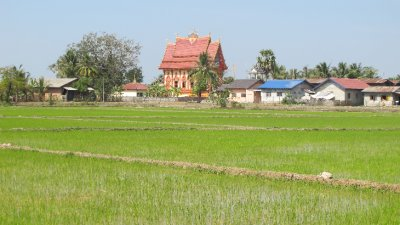 Arrozales y templos en las afueras de Vientiane, Laos