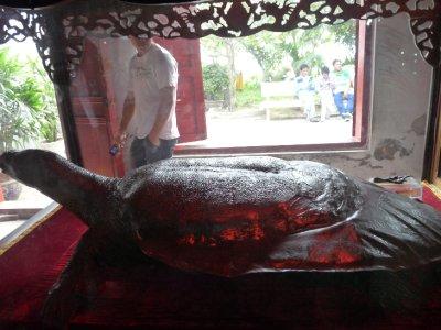 Embalmed Tortoise