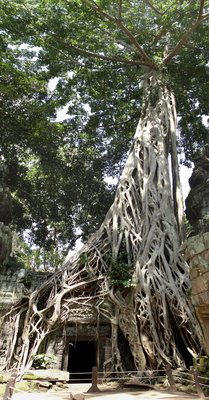 Tree Pan1
