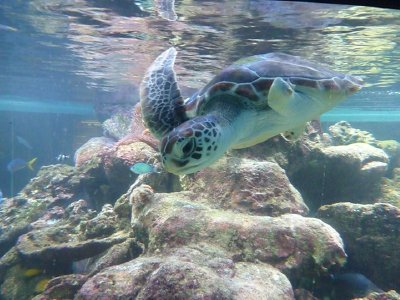 4_Turtle_Manly.jpg