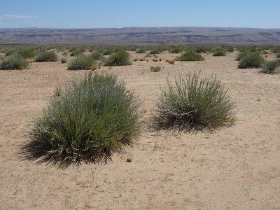 Leathal Euphorbia