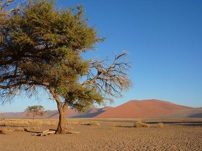 II Base of Dune 45