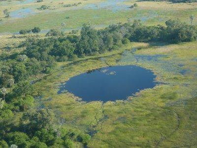 Eye, eye. Okavango Delta, Botswana