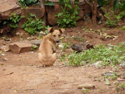 Cartoon dog at Kafue River